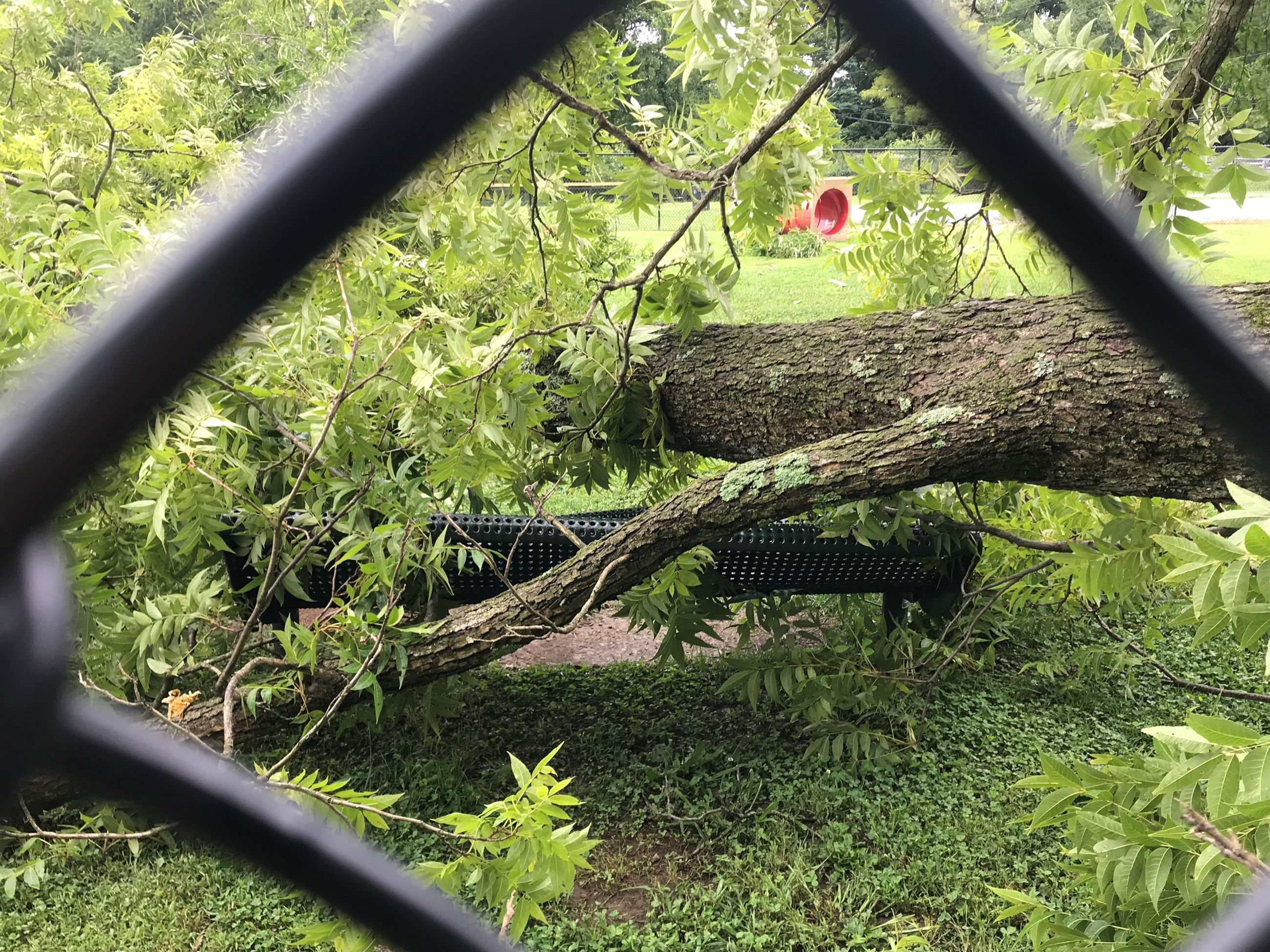 Fallen tree damage dog park
